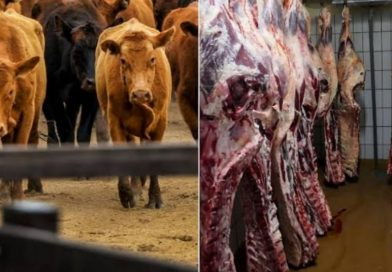 Koibatek residents wants government to ban slaughtering of Livestock at night.