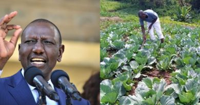 Ignore the pictures, I'm not tending to cabbages at Sugoi – DP William Ruto.